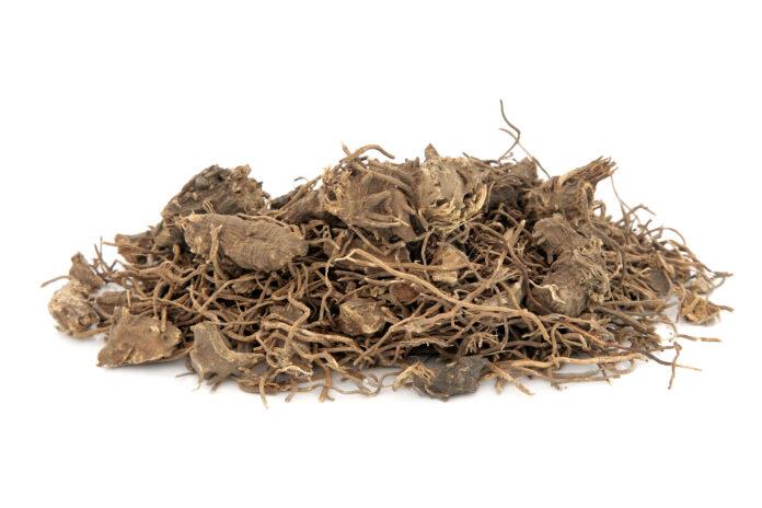 Racine d'actée à grappes noires utilisée en phytothérapie alternative naturelle sur fond blanc. Utilisée pour traiter les symptômes de la ménopause et les symptômes prémenstruels chez les femmes. Actaea racemosa.