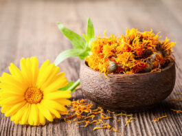 Dried and fresh marigold (calendula) flowers in a bowl on wooden rustic background space for text close-up. Herbal healthy flower tea, alternative medicine.