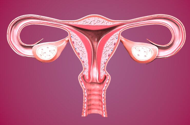 The female reproductive system (or female genital system) is made up of the internal and external sex organs that function in human reproduction.