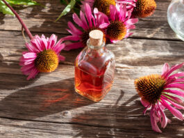 A bottle of herbal tincture with fresh blooming echinacea plant