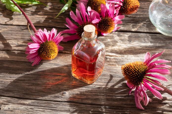Eine Flasche Kräutertinktur mit frisch blühender Echinacea-Pflanze