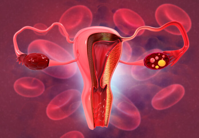 Anatomy of female reproductive system. 3d render