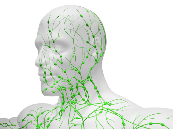 Digital medical illustration depicting the lymphatic system in the head and neck.
