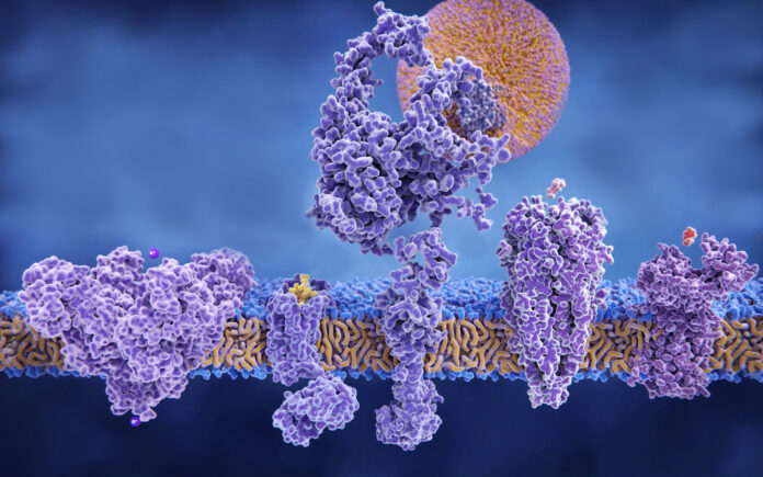 (left to right) Potassium channel (with potassium ions), delta-opioid receptor (with endorphin molecule), LDL receptor (with LDL particle in the background), acetylcholine receptor (with acetyl choline), histamine receptor (with histamine)