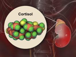 Molécula de la hormona cortisol y glándula suprarrenal, ilustración en 3D. El cortisol es una hormona esteroidea de la clase de los glucocóticos que se produce en la corteza de las glándulas suprarrenales