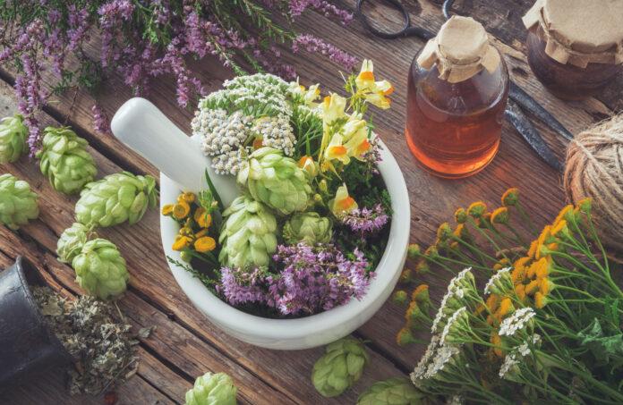 Mörser von Heilkräutern, gesunde Pflanzen, Flasche mit Tinktur oder Infusion. Ansicht von oben. Kräutermedizin.