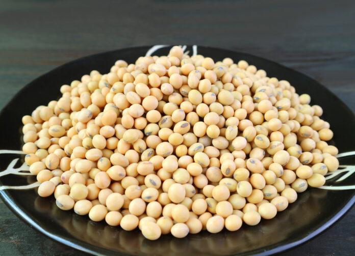 Pile de graines de soja séchées dans une assiette noire, Alimentation saine