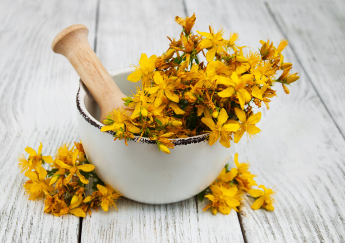 Saint-John's-wort in the mortar on a wooden table