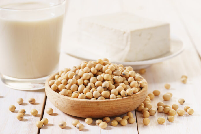 soy products with soybean, soymilk and tofu on wooden background