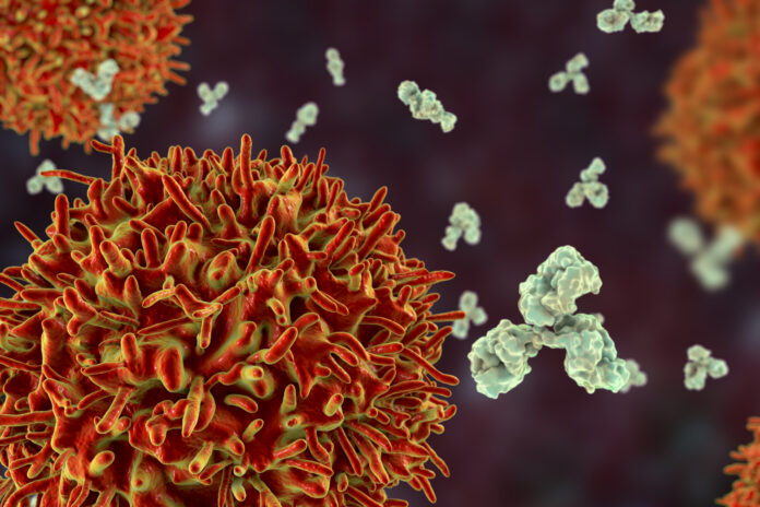 B-cell and antibodies, 3D illustration. Principles of immunity