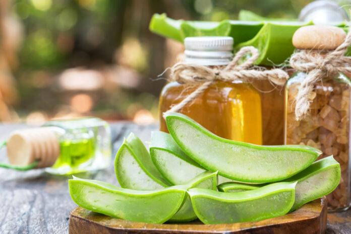Frische Aloe-Scheibe nützlich Spa für die Hautpflege, Stacked Aloe Vera Pflanze Scheibe Verwendung in Spa-Behandlung und Kosmetik