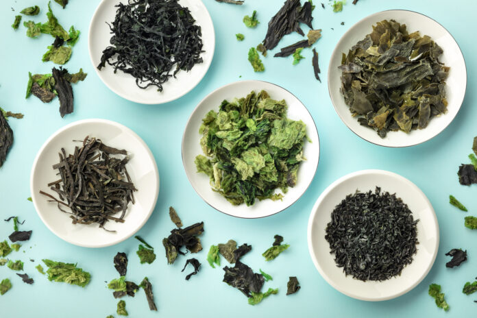 Various dry seaweed, sea vegetables, shot from above on a teal background