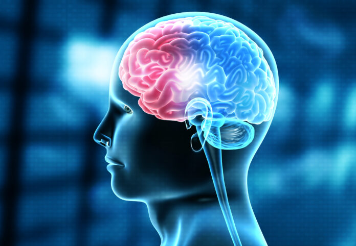 Human brain injury, damage,hemorrhage. 3d illustration