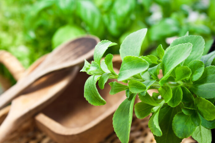 Stevia plant leaves and wooden kitchen tools close up